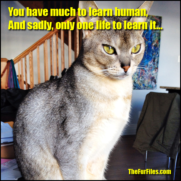 This Is How Smart Cats Really Are | TheFurFiles